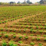 روش تشخیص اراضی ملی از کشاورزی